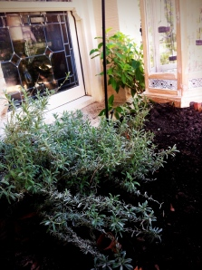 Herb garden out front